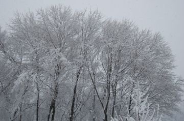 Snowylandscape1